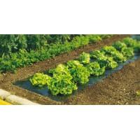 Plástico para acolchado de hortalizas