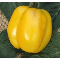 Semilla de Tomate Amarillo Stuffer