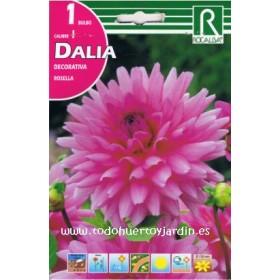 Bulbos de Dalia de la Variedad Rosella