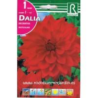 Bulbos de Dalia de Color Rojo