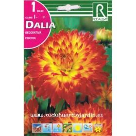 Bulbos de Dalia de la Variedad Procyon