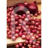 Bulbos de Cebolla Roja