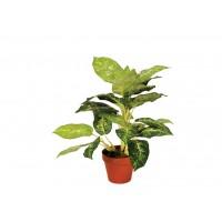 Planta Artificial de Calatea Luisae