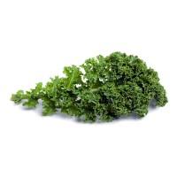 Plantel de Col Kale