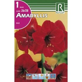 Bulbo de Amaryllis color Rojo