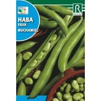 Semillas de Habas de Muchamiel 1 kg.