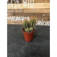 Cactus Variado en maceta de 5.5 Cms.