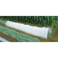 Invernadero Túnel de Cultivo