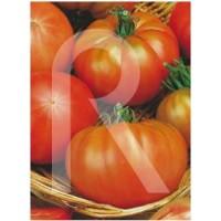 Semilla de Tomate de Muchamiel