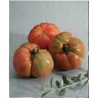 Semilla de Tomate Raf