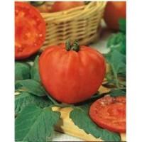 Semilla de Tomate Coraçao de Boi