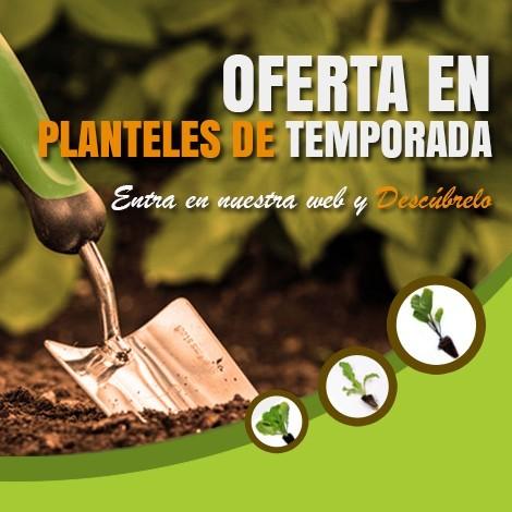 Planteles de temporada
